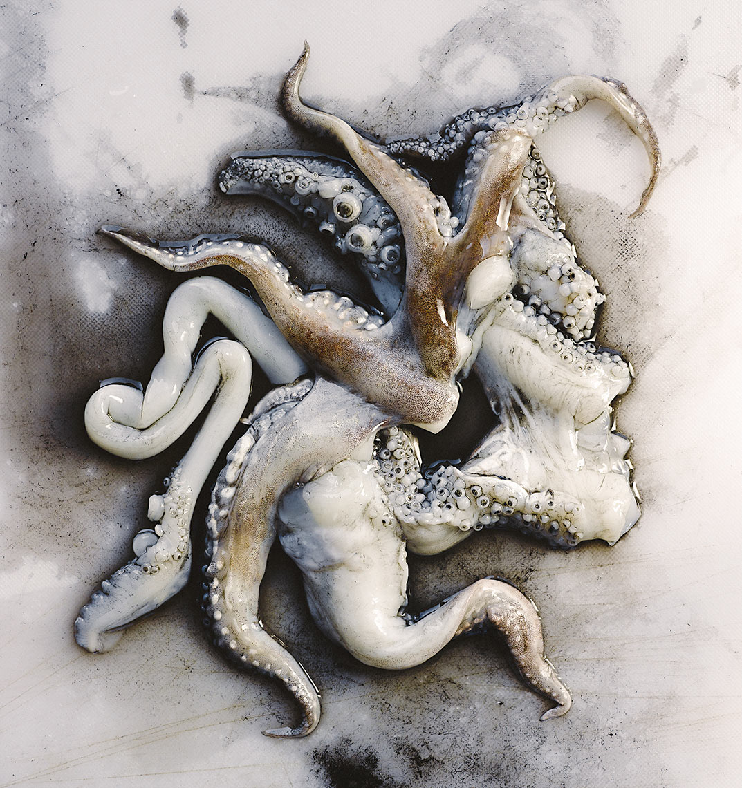 Cuttlefish | Colin Campbell - Food Photographer