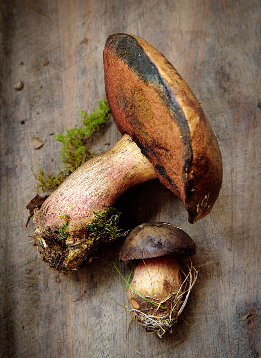 Mushroom | Colin Campbell - Food Photographer