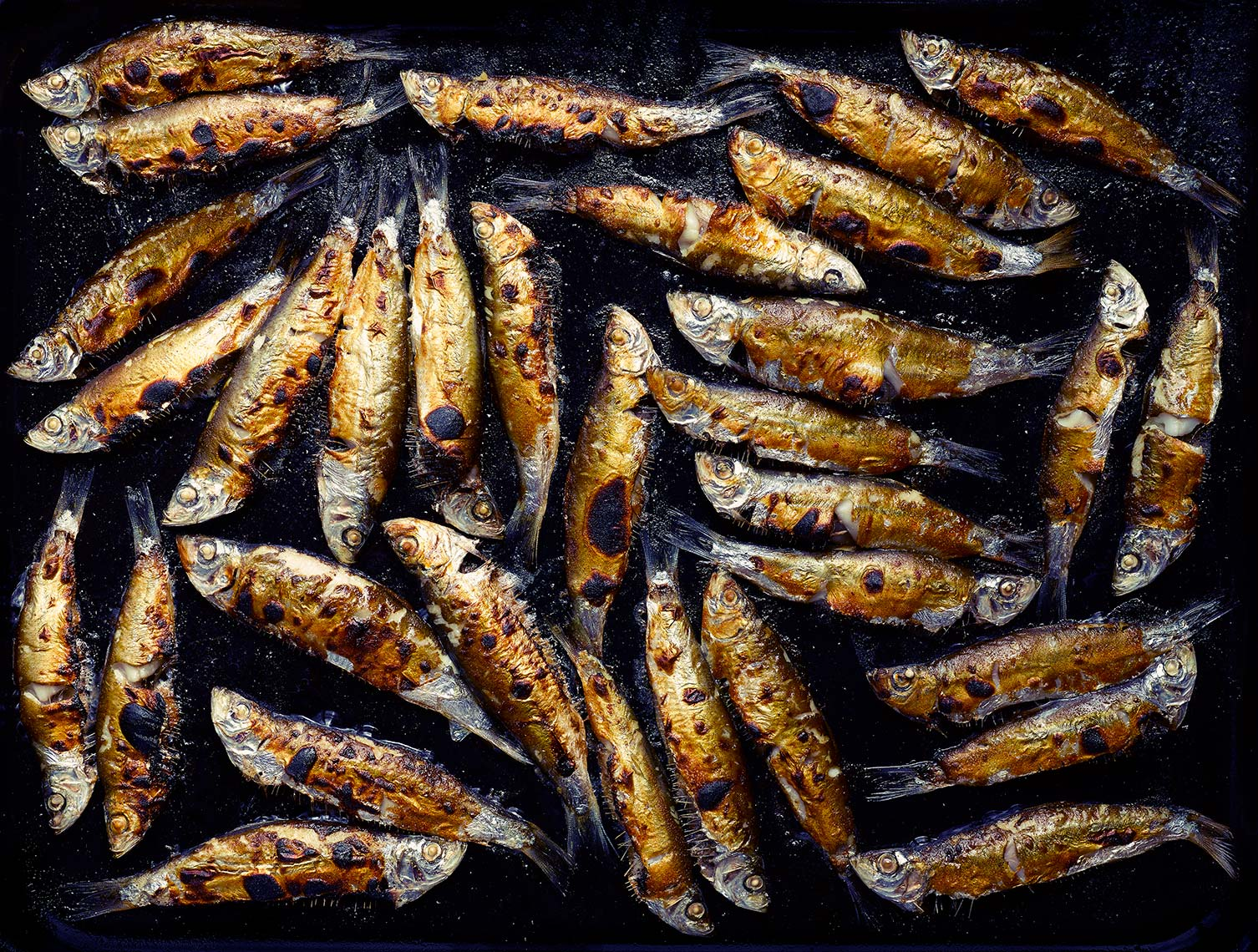 Sardines | Colin Campbell - Food Photographer