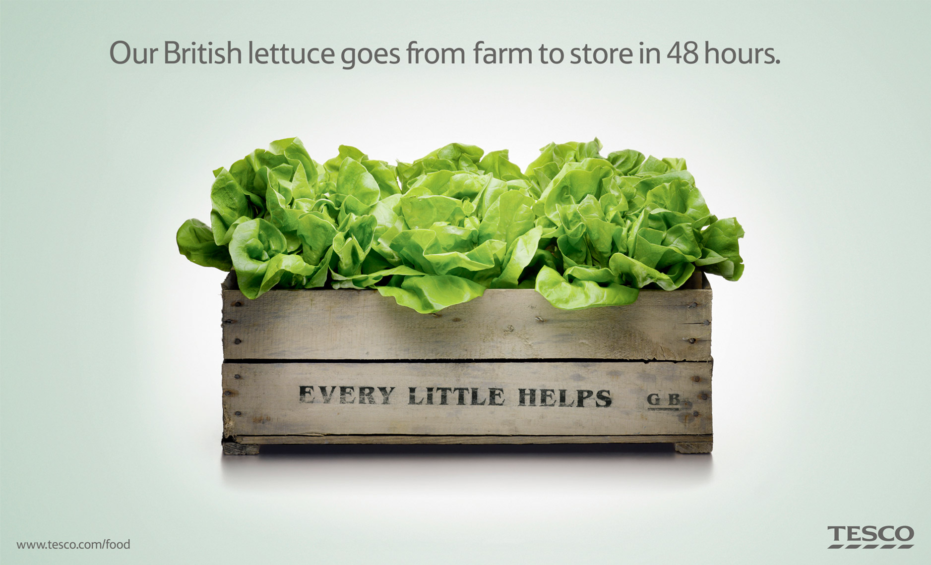 Tesco Lettuce | Colin Campbell-Food Photographer