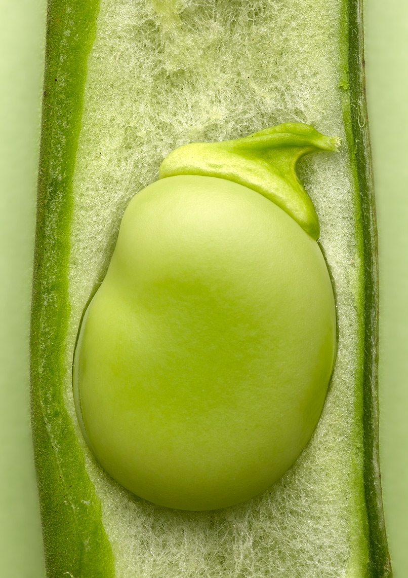 broadbean close up | Colin Campbell - Food Photographer